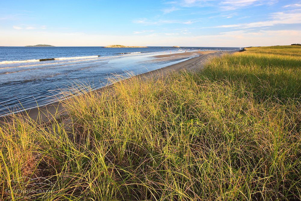 Dune grass and the beach at Popham Beach State Park in Phippsburg, Maine.