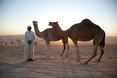 Dubai Camel Festival