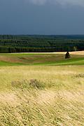 Landschaft Ostharz, Wiesen und Wald, Baum, Gewitterwolken, Harz, Sachsen-Anhalt, Deutschland | landscape eastern Harz, Harz, Saxony-Anhalt, Germany