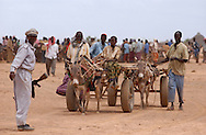 El Barde, Somalia.  Men walk with their donkey carts to collect  their monthly food ration in a distribution center run by the World Food Programme in El Barde, Somalia.  This region of northern Somalia, close to the Ethiopia's border has been suffering years of a severe drought. (PHOTO: MIGUEL JUAREZ LUGO)