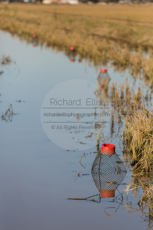 Crayfish or crawfish wire traps on a flooded rice paddy in rural Eunice, Louisiana. Crawfish are farmed in flooded rice fields giving farmers a summer rice crop and a winter crawfish harvest.