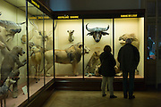 Visitors watching the old windows of the AFrica museum.