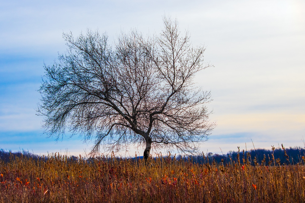 A single tree with bare limbs stands against the streaked skyline in the field of Big Meadows at Shenandoah National Park in Virginia.