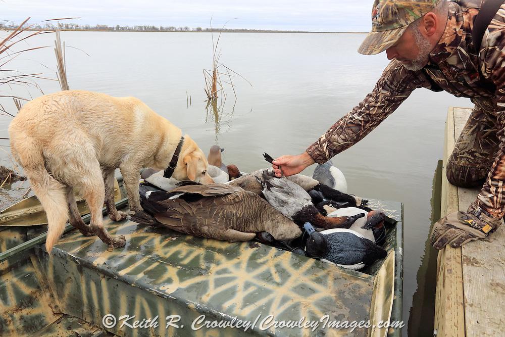 Successful hunters examining their bag during a Manitoba Diver Hunt