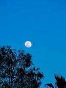 Full moon in the night's sky