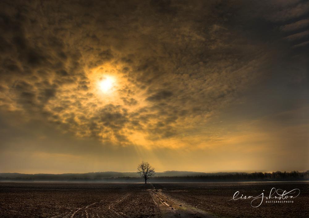 lisa johnston | lisa@aeternus.com Tree in a field during early morning, near Marthasville, Missouri.