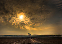 lisa johnston | lisa@aeternus.com Tree in a field during early morning, near Marthasville, Missouri.