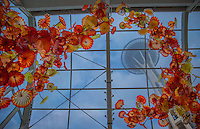 Seattle, Washington- October 1, 2014: The Space Needle looms over the Glasshouse at Chihuly Garden and Glass. The 100-foot long sculpture is one of Chihuly's largest suspended works. CREDIT: Chris Carmichael for the New York Times