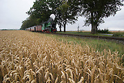 "The aptly named ""Rasender Roland"" (Speeding Roland) is a vintage narrow gage steam railway line linking Lauterbach and Goeren. Here it passes a wheat field near Posewald before a heavy summer downpour."