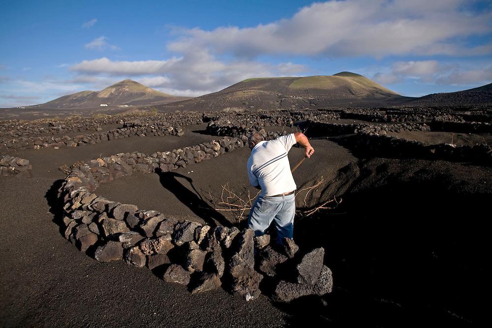 Viñedos en La Geria. Isla de Lanzarote.