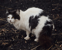 Black & White Neighborhood Cat. Image taken with a Nikon D5 camera and 80-400 mm VRII lens (ISO 720, 400 mm, f/5.6, 1/400 sec).
