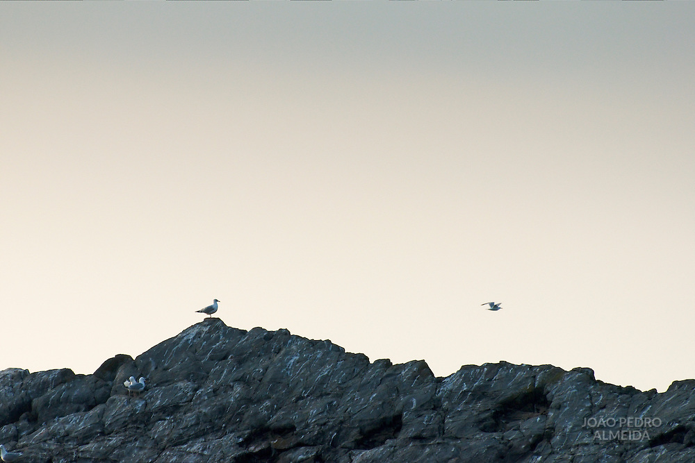 Seagulls at the rocks of hartland Quay