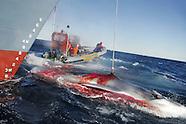The Whaling Debate - pro/anti whaling.