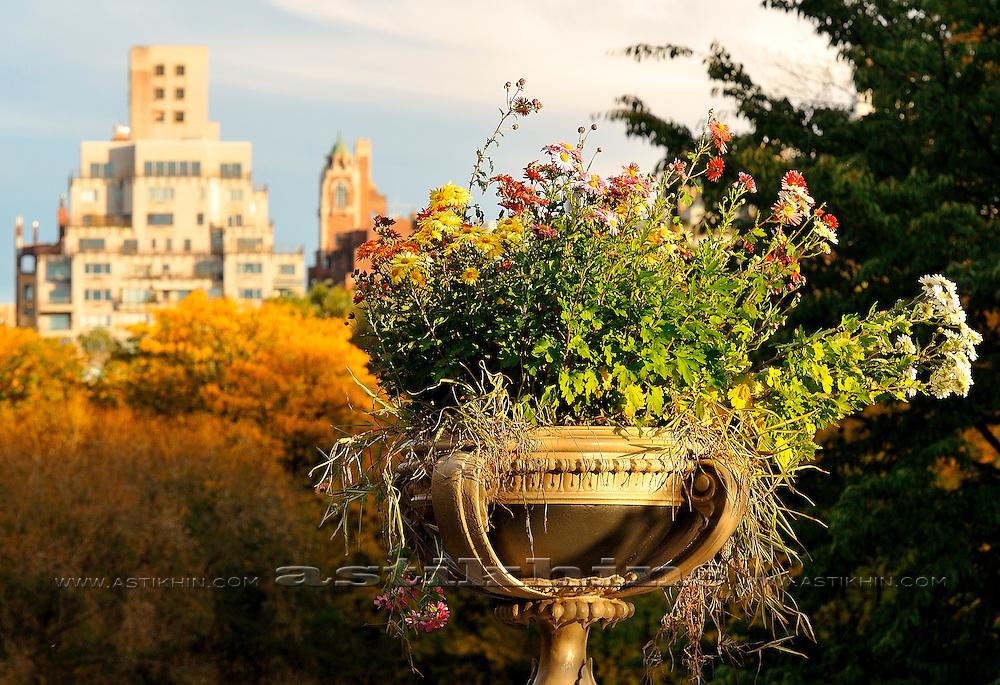 Bouquet in Central Park