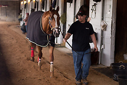 Derby 142 hopeful Whitmore walks the shedrow after training, Wednesday, May 04, 2016 at Churchill Downs in Louisville.