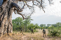 Counter poaching patrol , Save Valley Conservancy, Zimbabwe