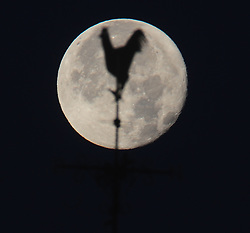 © Licensed to London News Pictures.05/11/2017.<br /> Sidcup, UK.<br /> Saint James church weathervane North Cray Road, Sidcup,Kent.<br /> An early morning Beaver Moon over Sidcup,Kent.<br /> Photo credit: Grant Falvey/LNP