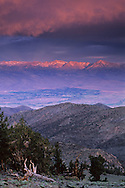 Stormy sunrise light on Eastern Sierra over Owens Vly.& Ancient Bristlecone Pine Forest the White Mountains, CALIFORNIA