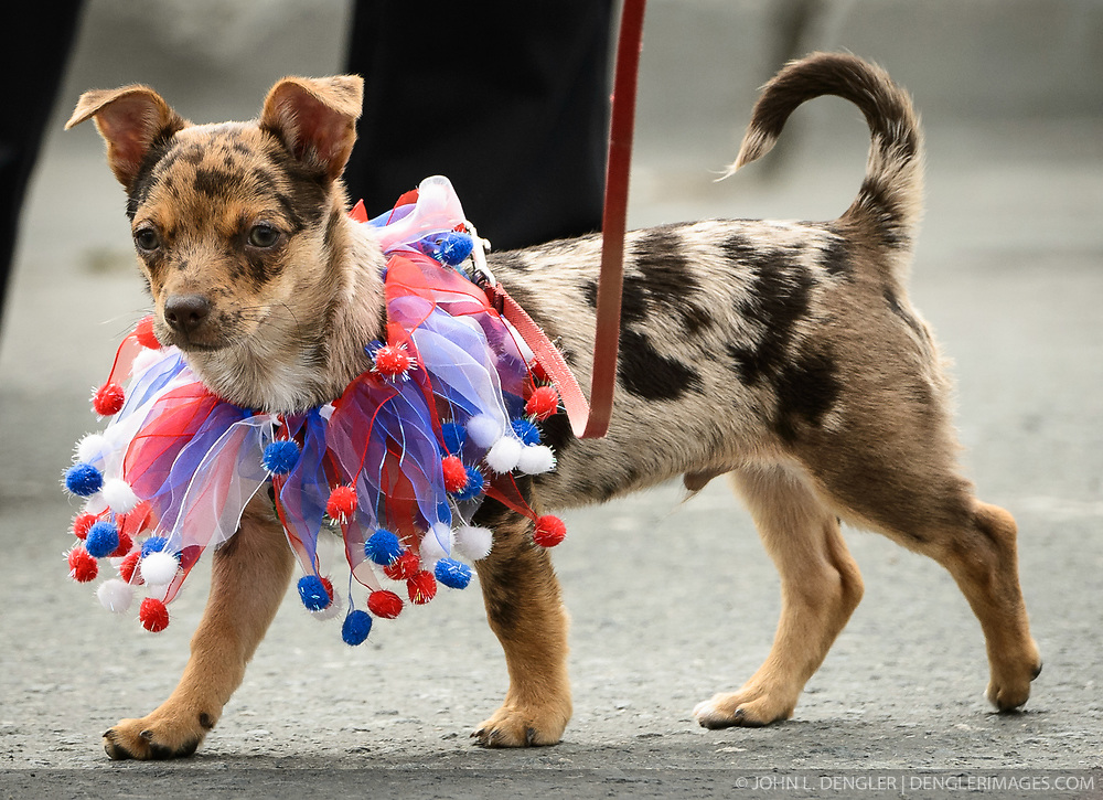 The town of Haines, in southeast Alaska, celebrates the Fourth of July with a parade, picnic, and other activities. For the parade, the local animal rescue kennel invited pet owners to dress up their pets in patriotic garb to march with them in the parade.<br /> <br /> Haines, a picturesque costal fishing community, is located on the Lynn Canal between the towns of Skagway and Juneau.