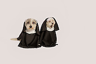 tow small dogs dressed as nuns