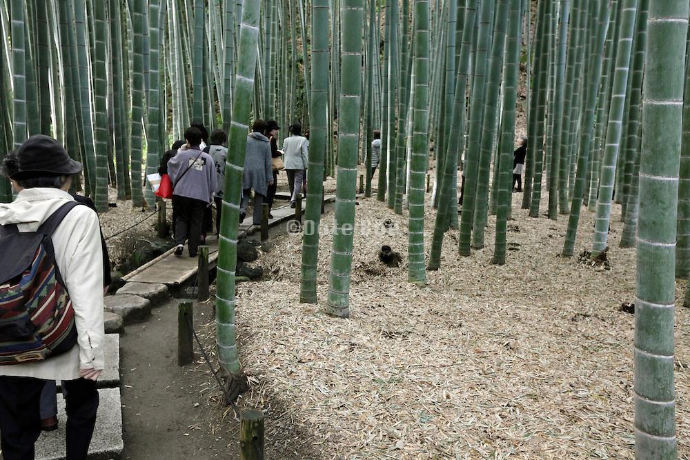 Asian tourist group walking through the bamboo garden at Hokokuji temple in Kamakura Japan