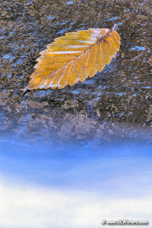 Fall leaf next to a mountain stream.