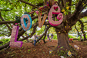A love tree in the faraway Forest - The 2017 Latitude Festival, Henham Park. Suffolk 15 July 2017