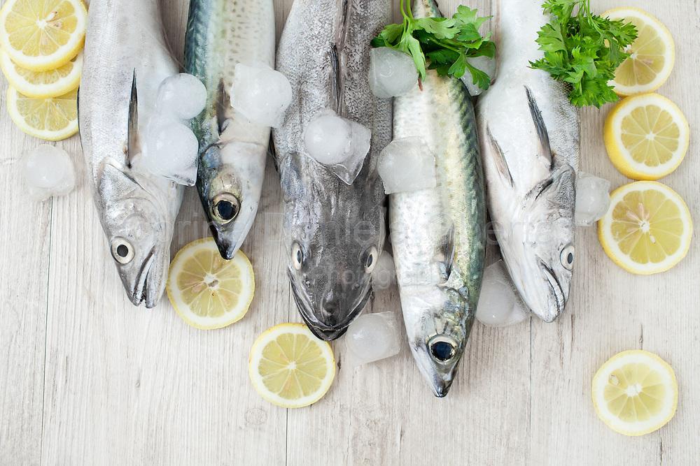 Raw fresh mackerel and codfish with ice, lemon slices and parsley.