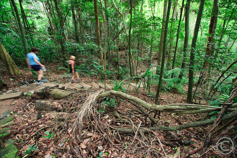 The Blue and Red Arrow walking tracks on Mt Whitfield are a popular walking spot in Cairns, far north Queensland, Australia.