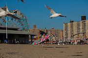 Ellen Tobben in Coney Island