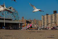 Ellen Tobben in Coney Island