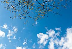 THEMENBILD - Äste mit Knospen mit blauen Himmel und Wolken, aufgenommen am 24. April 2017, Klammsee, Kaprun Österreich // branches with buds with blue sky and clouds at the Klammsee, Kaprun Austria on 2017/04/24. EXPA Pictures © 2017, PhotoCredit: EXPA/ JFK