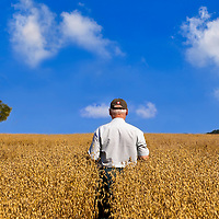 White-haired farmer in a field of golden oats under a bright blue summer sky, facing away from the camera. He wears a ball cap with a tiny (Canadian) flag on the back.