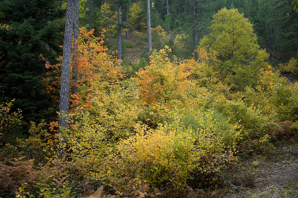 Greece, Pindos Mountains, Pindos NP, Valia Calda, Mixed Forest in Valia Calda