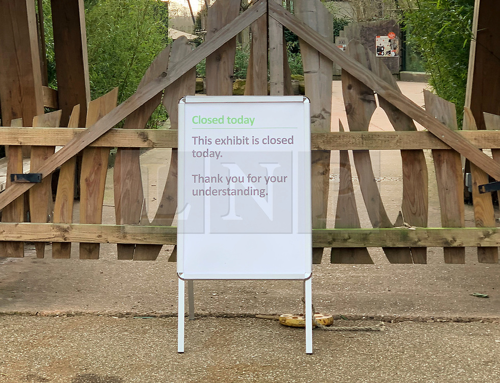 """© Licensed to London News Pictures. 09/02/2019. London, UK. A notice at the entrance to the tiger enclosure at London Zoo where endangered Sumatran tiger Melati was killed in fight with a male. Male tiger Asim was brought to the zoo from a Danish safari park 10 days ago in the hope he would be the """"perfect mate"""" for long-term resident Melati. Photo credit: London News Pictures."""