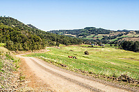 Estrada de terra na Linha Pinhal. Treze Tílias, Santa Catarina, Brasil. / Dirt road at Linha Pinhal. Treze Tilias, Santa Catarina, Brazil.