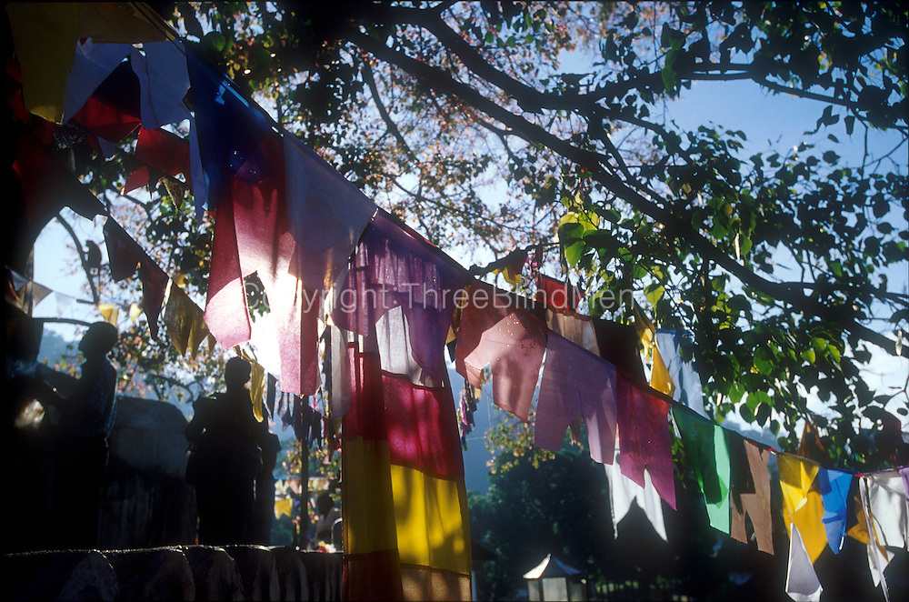 Flags around a Bo Tree in Kandy. <br /> Square in front of the Dalada Maligawa.<br /> circa 2002