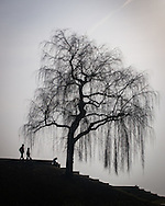 A tree silhouette as seen along the shore of Lake Geneva (Lac Léman) in Lausanne, Switzerland.