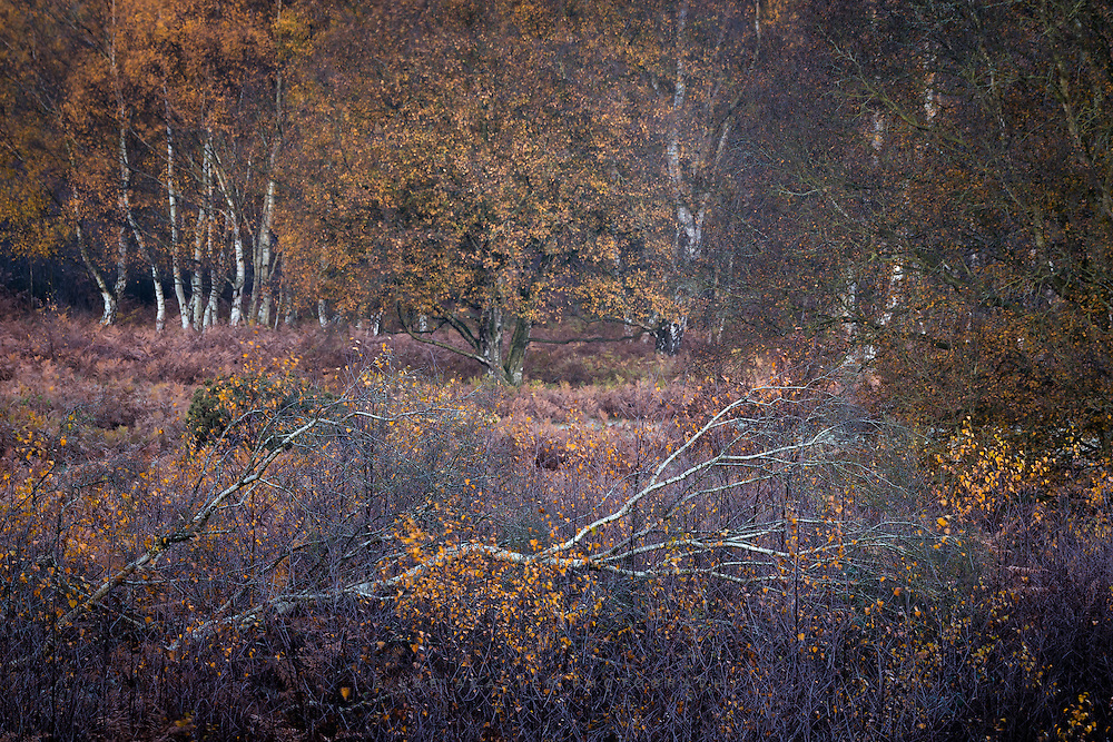 In the woods just before sunrise in Autumn takes some beating