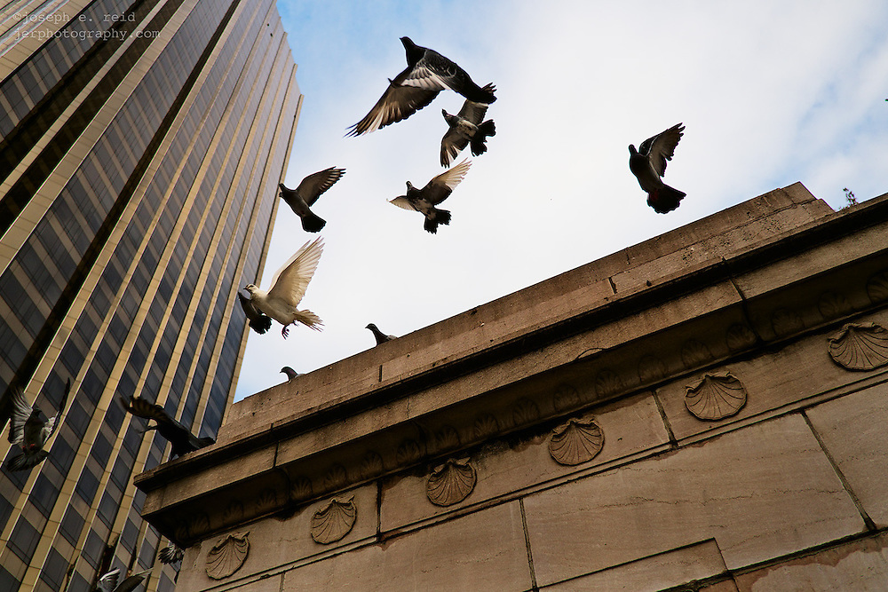 Pigeons taking flight
