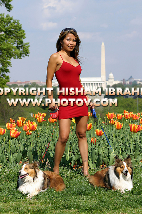 Beautiful sexy Asian Woman waking two dogs, Washington DC skyline in background - Washington DC, USA
