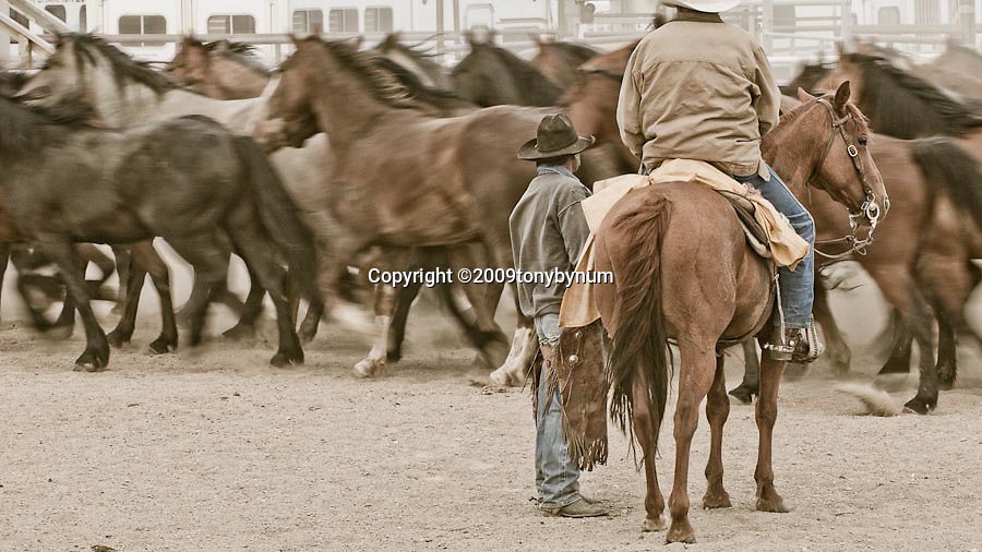 cowboy horse boss discuss the rodeo bucking horses in the area browning montana