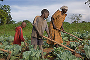 Madam Edith Kizito and two of her children farm her crops. Kulika trained Edith in 2005 and since then her production and quality of crops has increased dramatically. She is the chairperson of the Ziunula group, one of seven groups trained by Kulika in the Nakasongolo district of Uganda.