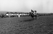 "Racing At Punchestown.     K22..1976..28.04.1976..04.28.1976..28th April 1976..The John Jameson Cup race was run today at Punchestown. The sponsor of the race are Irish Distillers Ltd. The race an extended handicap novice steeplechase is for horses four yers old and upwards that have not won a steeplechase on or before 1st Sept.,75..The race was won by ""No Hill"" owned by Mrs J.B.O'Callaghan,ridden by Mr T.M.Walsh and trained by Mr R Walsh..Image shows ""No Hill"" edging in front to take the lead and the title in the closing stages of the race."