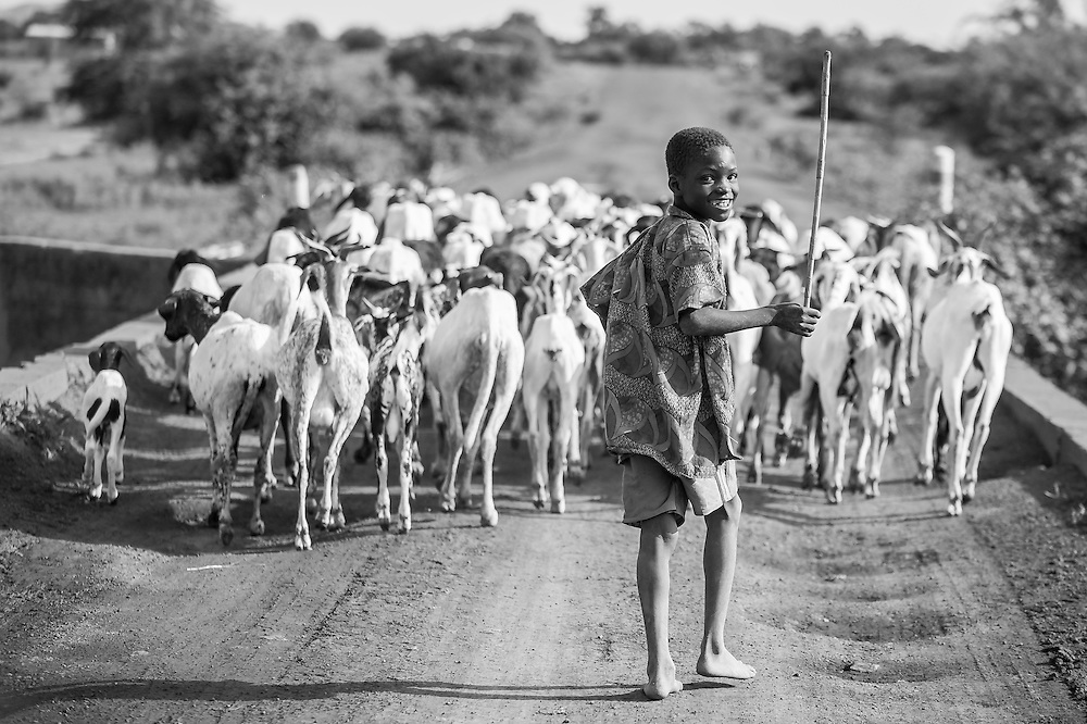 Portrait of a young Burkinabe boy herding the family flock of goats and sheep across a bridge in the Sahel of northern Burkina Faso