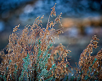 Weeds with morning dew on at Kelley's Place near Cortez, Colorado. Image taken with a Nikon D3 camera and 70-200 mm f/2.8 VR lens (ISO 200, 130 mm, f/2.8, 1/200 sec).