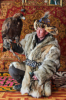 Mongolie, province de Bayan-Olgii, Yerkhalym, chasseur à l'aigle Kazakh // Mongolia, Bayan-Olgii province, Yerkhalym, Kazakh eagle hunter with his Golden Eagle