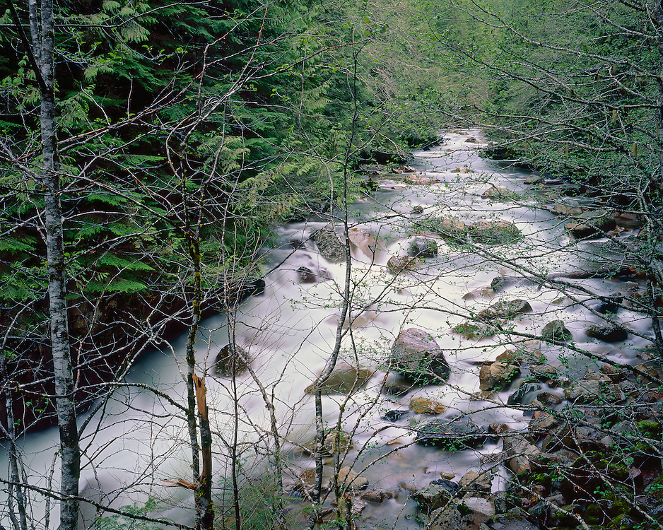 Northern Fork of the Nooksack River, Mount Baker-Snowqualmie National Forest, WA / #WSH101