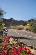 Cove Road Dana Point
