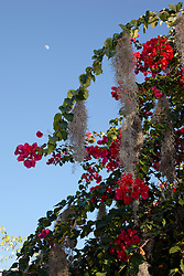 """Flowers and Moon"" - These flowers and moon were photographed in Puerto Vallarta, Mexico."